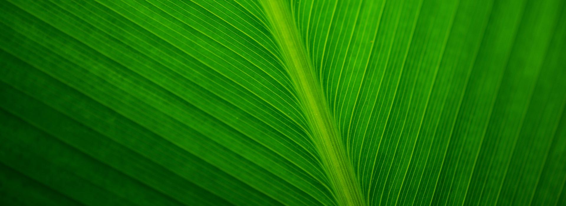 綠葉廣告有限公司